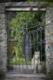 Staverton Garden Gate with wolf by Spencer Field Larcombe, Metal, Hot Forged Mild Steel